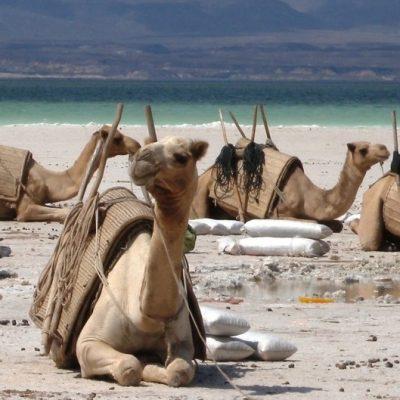 Djibouti: Heaven and Hell ENG